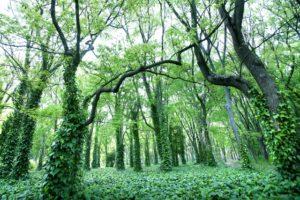 木の葉のふれあう音